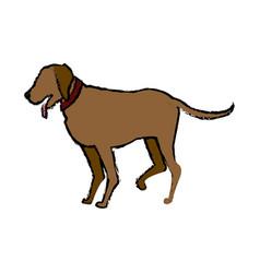 Brown dog pet domestic animal vector