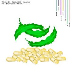 Winged beanswith vitamin b1 and vitamin b2 vector