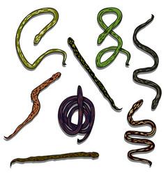 Snake reptile set vector