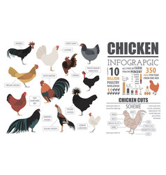 Poultry farming infographic template chicken vector