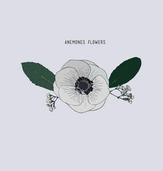 Anemones flowers hand drawn sketch line art vector