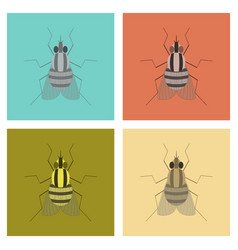 Assembly flat insect fly vector