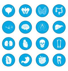 Internal organs icon blue vector