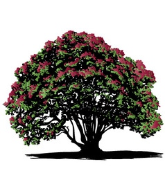 Pohutukawa tree vector