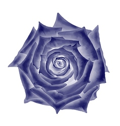 Dark blue rose flower vector