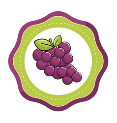 Emblem sticker grapes fruit icon image vector