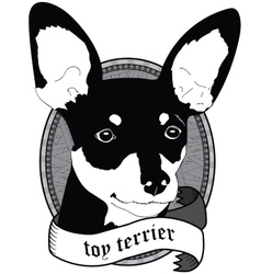 Toy terrier Portrait Isolated dog vector image