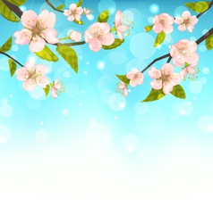 Cherry blossom branches of tree natural glowing vector