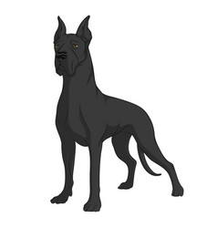 color image of a black great dane vector image vector image