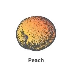 hand-drawn juicy ripe peach vector image