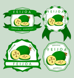 the theme feijoa vector image