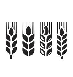 black wheat vector image