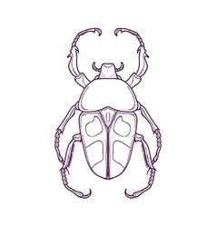 Outline Beetle Bug Insect Jumnos ruckeri vector image