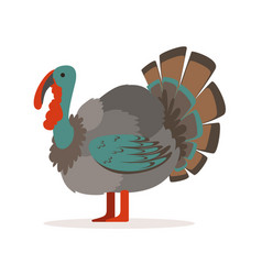 turkey bird poultry farming vector image