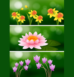 three scenes with three different flowers vector image