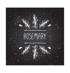 Herbs and spices collection - rosemary vector