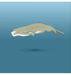 Sperm whale realistic flat vector