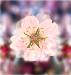 Cherry blossom blurry background vector