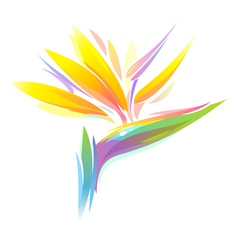 Bird of paradise flower vector
