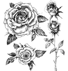 Flowers set hand drawn rose etch style vector