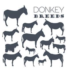 Donkey breeds icon set animal farming flat design vector