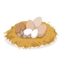 Nest with eggs of different birds poultry vector