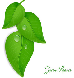 Green leaves with water drops vector
