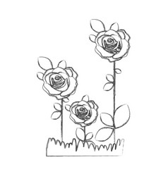 blurred silhouette sketch roses planted with vector image vector image