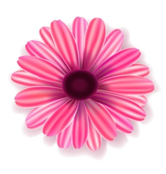 Flowers realistic vector