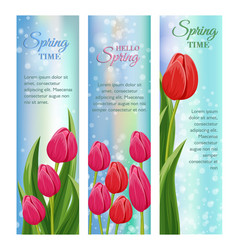 Hello spring greeting cards with blooming tulip vector