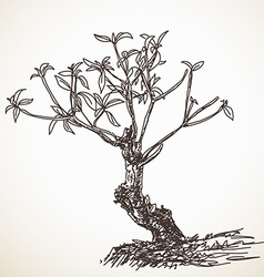 small tree vector image vector image