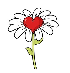 Flower of love Red heart symbol of love and Daisy vector image vector image