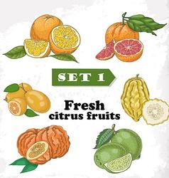 Set 1 Fresh citrus fruits of orange grapefruit vector image