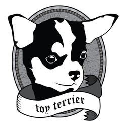 Toy terrier Portrait Isolated dog vector image vector image