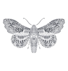 Amazing fly butterfly vector image vector image