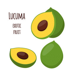Lucuma exotic fruit organic healthy superfood vector