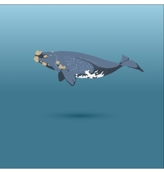 right whale whale realistic flat vector image vector image