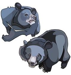 Cartoon himalayan black bears vector
