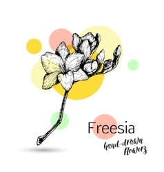 Freesia flower for wedding or birthday card vector