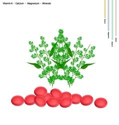 Fresh neem with vitamin k calcium and magnesium vector