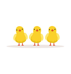 Three cute chickens vector