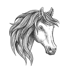 Purebred stallion of andalusian breed sketch vector