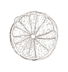 Lemon fruit draw vector