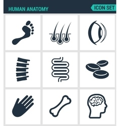 Set of modern icons human anatomy leg vector