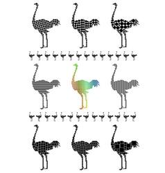 Ostrich silhouette set vector