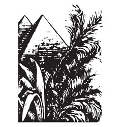 Pyramids or palms psychometric properties vector