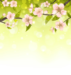 Cute Branches of Cherry Blossom Tree vector image vector image