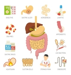 Digestive system icons set vector