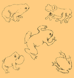 frogs sketch by hand pencil drawing by hand vector image vector image