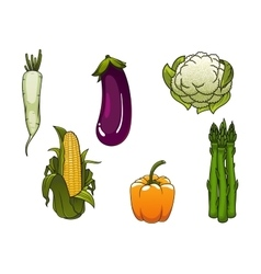 Fresh healthy isolated farm vegetables vector